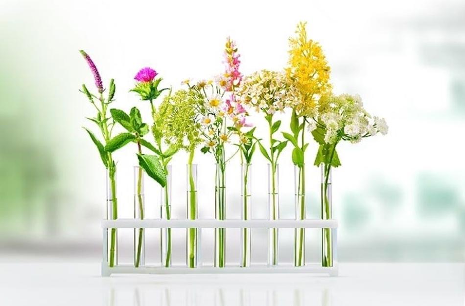 Τα Βότανα Είναι Απαραίτητα Συστατικά της Ζωής μας