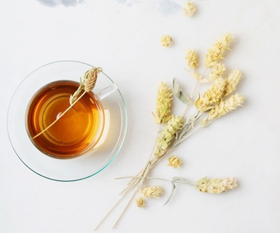 Greek Mountain Tea:  Facts about a traditional medicinal plant  (In German)